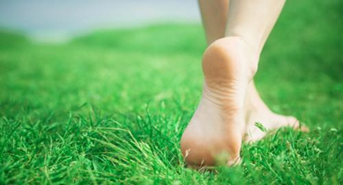 Лечение грибка ногтей травами, как пить сборы