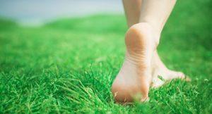 Травы от грибка ногтей на ногах